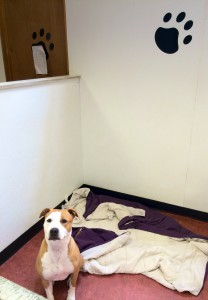 A happy dog at The Barrie Inn's cageless boarding facility in Woodmere Long Island